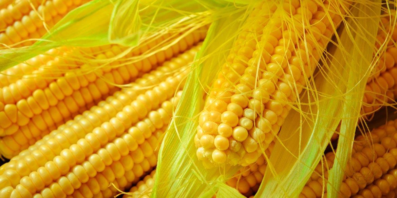 Brandschutz Mittel auf Maisstärkebasis